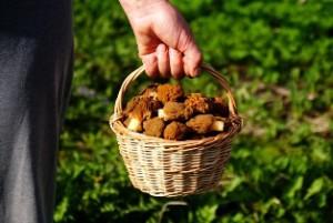 корзинка, корзинка с грибами